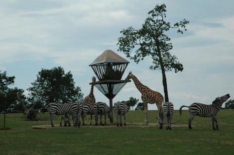 Animal Safari (37)